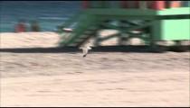 Panning shot following a seagull at a beach.