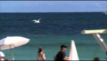 Seagull flying around at a beach.