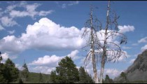 Trees with sky and clouds in Yellowstone.
