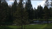 Silhouette of trees in Yellowstone.