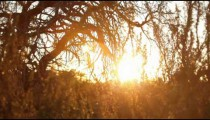 Sun Through the Trees in Moab