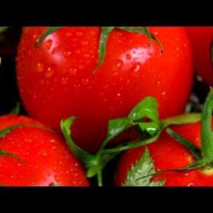 Close shot of an assortment of vegetables.
