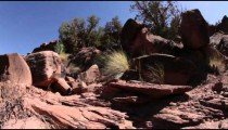 Desert brush in Moab