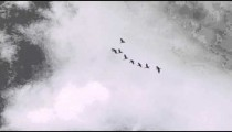 Birds flying in loose formation