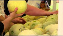 Row of people inspecting cantaloupes