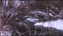 Snow-covered bush reaches over frozen creek