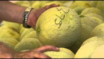 Close up of hands sorting through cantaloupes