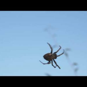 Spider crawling on its invisible web