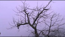 Low-angle footage of bare branches of a tree