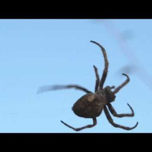 Close up of arachnid on its invisible web