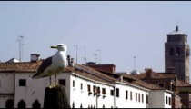 Slow motion shot of a seagull perched and then flying in front of the rooftops