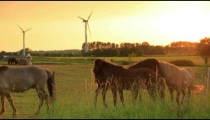 Denmark stock footage 58