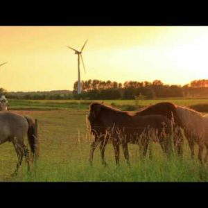 Denmark stock footage 58