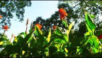 Tracking footage of tall flowers and trees