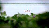 Hippo disappears underwater near aquatic plants