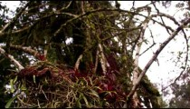 Pan of a bird's nest held by leafless branches