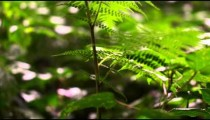 Close up racking focus footage of leaves on plants