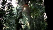 Racking-focus footage of the sun peeking through forest canopy