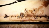 Low-angle footage of long-winged bugs grouped on small objects in a room