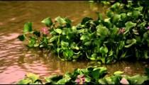 Aquatic plants move in the current