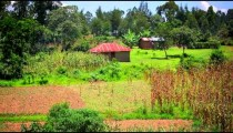 Panning shot of an agricultural field in Kenya.