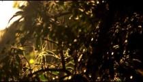 Racking focus footage of tree leaves