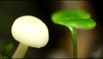 White mushroom and small seedling coming into focus