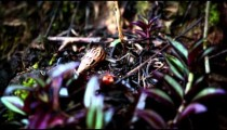 Close up of snail turning drastically
