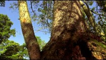 Tracking footage of thorny tree