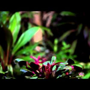 Tilting footage of colorful plants at tree's base, and of tree's trunk