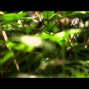Close up racking focus footage of undisturbed plants