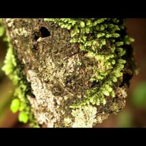 Moss-covered tree trunk and branch