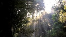 Tilting footage of trees and tree canopy on a sunny day