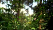 Weeds and out-of-focus forest