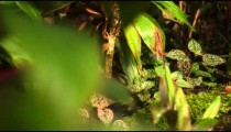 Tracking footage of small forest plants