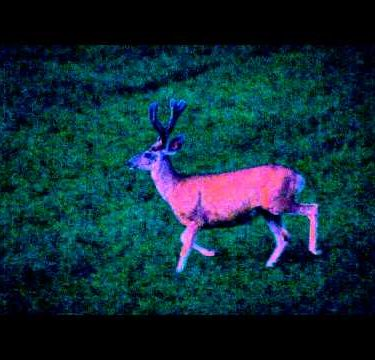 Slow motion night footage of large male deer running.