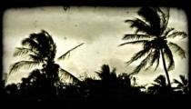 Sillouetted palm trees. Vintage stylized video clip.