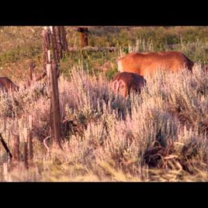 Slow motion daytime shot of deer feeding near barbed wire fence.