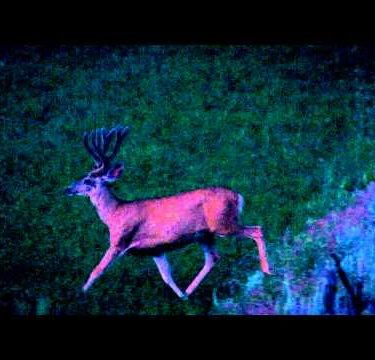 Slow-motion night shot of large buck jumping over tree and running through field