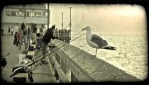 California fishing pier. Vintage stylized video clip.