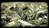 Close up of group of pigeons. Vintage stylized video clip.