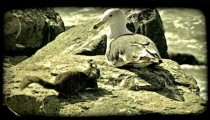Squirrels and seagulls. Vintage stylized video clip.