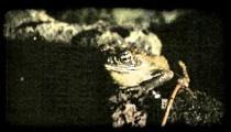 Frog on rock. Vintage stylized video clip.
