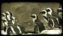 Penguins waddle along walkway. Vintage stylized video clip.