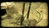 Mice run on circular wheel. Vintage stylized video clip.