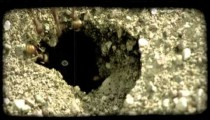 Worker ants at hole. Vintage stylized video clip.