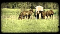 Horses on a pasture. Vintage stylized video clip.
