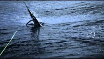 Slow motion shot of a swordfish jumping out of the ocean.