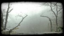 Small, bare trees and mist. Vintage stylized video clip.