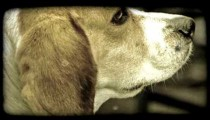 Puppy Head. Vintage stylized video clip.